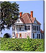 Cotton Fields Back Home Canvas Print