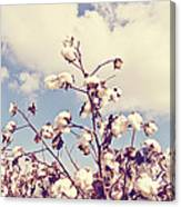 Cotton In The Sky With Filter Canvas Print