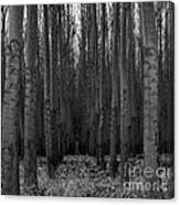 Cottonwood Alley Monochrome Canvas Print