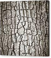 Cottonwood Bark 1 Canvas Print