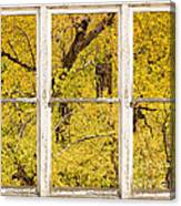 Cottonwood Fall Foliage Colors Rustic Farm Window View Canvas Print