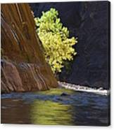 Cottonwood On The Virgin River Canvas Print