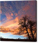 Cottonwood Sky Canvas Print