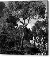 Cottonwood Treem Zion Canyon, Utah. 1929 Canvas Print