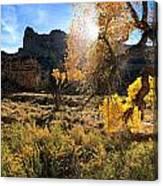 Cottonwoods In Buckhorn Wash 4055 Canvas Print