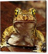Couchs Spadefoot Toad Canvas Print