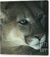 Cougar-7688 Canvas Print