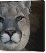 Cougar Digitally Enhanced Canvas Print