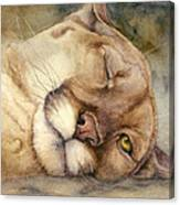 Cougar    I See You     Canvas Print