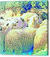 Counting The Sheep But Can't Sleep  Canvas Print