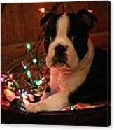 Country Christmas Puppy Canvas Print