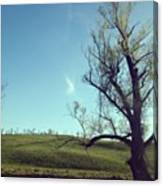 #country #countryside #tree #bluesky Canvas Print