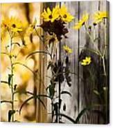 Country Daisy Canvas Print
