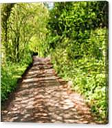 Country Lane Painting Canvas Print