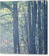 Country Woodlands Canvas Print