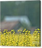 Country Yellow Canvas Print