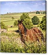 Countryside Horse Canvas Print