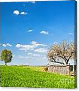 Countryside Landscape During Spring With Solitary Trees And Fence Canvas Print