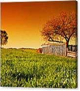 Countryside Orchard Landscape At Sunset. Spring Time Canvas Print