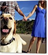 Couple Take Their Dogs For A Walk Canvas Print