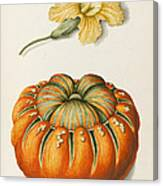 Courgette And A Pumpkin Canvas Print