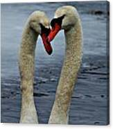 Courting Swans Canvas Print