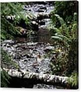 Covell Creek 1 Canvas Print