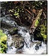 Covell Creek 4 Canvas Print