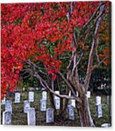 Covered In Fall Colors Canvas Print