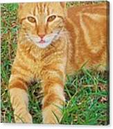 Covered In Orange Canvas Print
