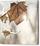 Covered With Ice Maple Leafe On A Sunny Day Canvas Print