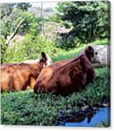Cow 6 Canvas Print