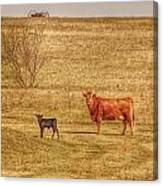Cow And Calf Canvas Print