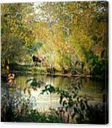 Cow By The Pond Canvas Print