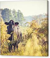 Cow Hiding In The Weeds Canvas Print