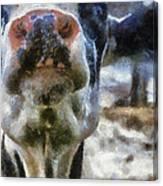 Cow Kiss Me Photo Art Canvas Print