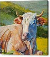 Cow Lying Down  Canvas Print