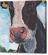 Cow No 05. 0556 Irish Friesian Cow Canvas Print
