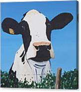 Cow On A Ditch Canvas Print