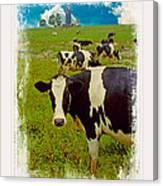Cow On Farm Version - 3 Canvas Print