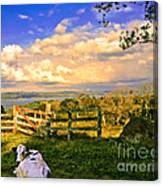 Cow Out To Pasture In Costa Rica Canvas Print