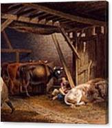 Cow Shed Canvas Print