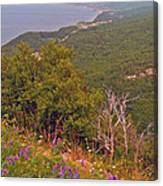 Cow Vetch In Cape Breton Highlands Np-ns Canvas Print