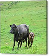 Cow With Calf On Thorpe Hillside Canvas Print