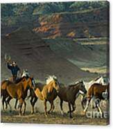 Cowboy Driving Horses Canvas Print