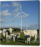 Cows And Windturbines Canvas Print