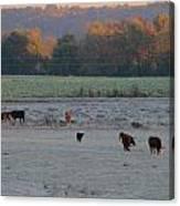 Cows At Sunrise Canvas Print