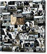 Cows Collage Canvas Print