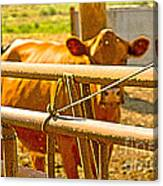 Cows Coming Home Canvas Print