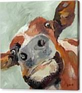 Cow's Eye View Canvas Print
